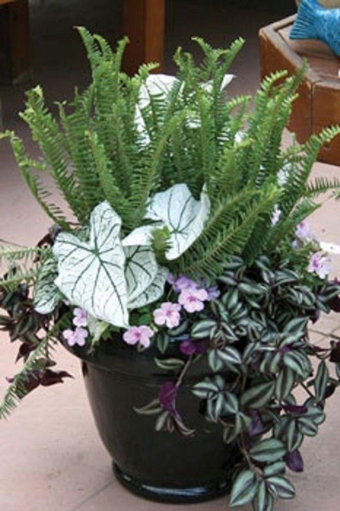 Caladium, fern, wandering jew, impatient. - Nice color contrast between wandering jew and caladium.