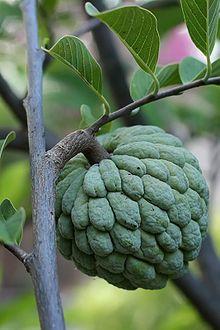 Pinha, fruta do conde ...