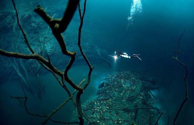 Underwater river, off the Yucatan Peninsula...