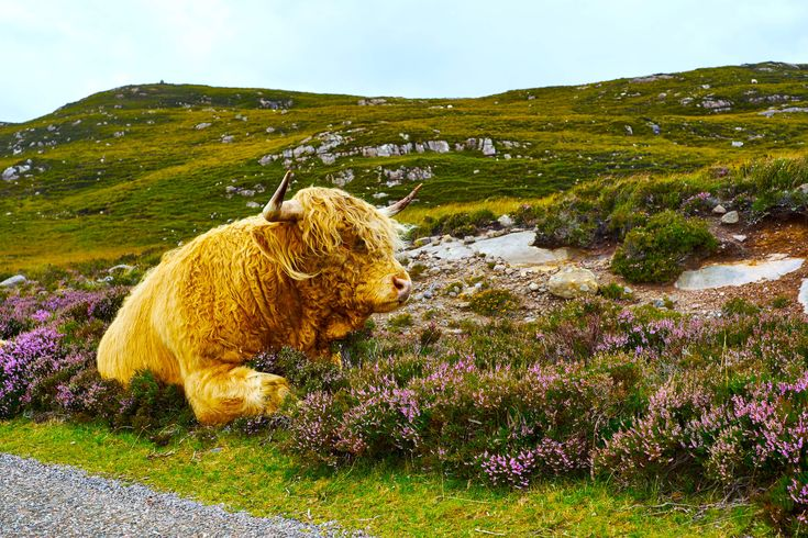 Looking for Scotland vacation packages? Check out our self-drive tours to Scotland, City-Stays, Hoppers, Group Tours, Theme & Interest packages, & more!