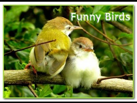 Funny Bird Best Compilation | 2017 | HD -  #bird #birds  #birding #animale #bird_watchers_daily #animal #birdwatching #pets #nature_seekers #birdlovers This video is related to funny birds video ====================================================================== Social Midea: Link for Facebook:  Link for Twitter:  Link for... - #Birds