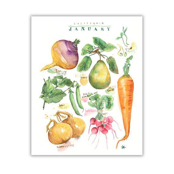 California Seasonal Food Print January Vegetable Poster Watercolor Veggies Food Art Food Print Vegetable Illustration Watercolor Fruit