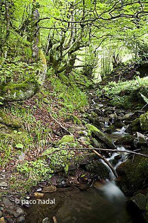 Parque Natural de Redes, donde Asturias cambia del negro al verde #Caso #ReservaBiosfera #naturaleza #nature #Asturias #ParaísoNatural #NaturalParadise #Spain