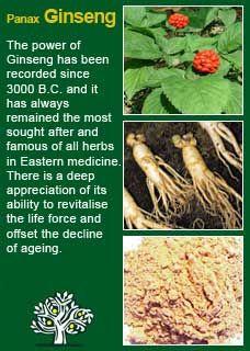 Asian ginseng panax tit army