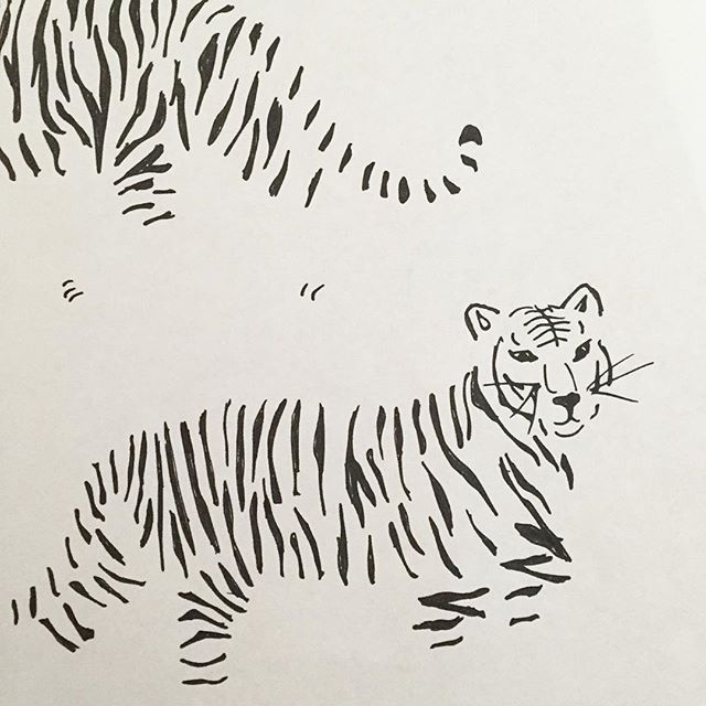 tiger outlines by abby galloway