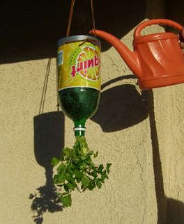 plants in a botttle | Plastic Bottles into Upside Down Herb Planters