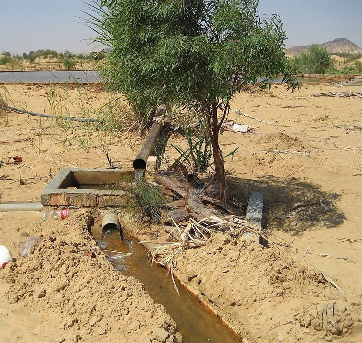Bahariya Oasis, Egypt. Aquifer (large pond) for qanat system in background. The water drains relying on gravity, with the destination lower than the source, which is generally an upland aquifer. (photo Carol Riphenburg)