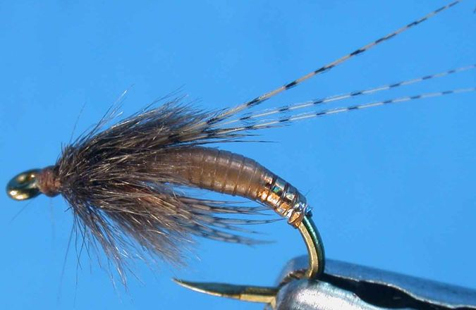 I have had amazing luck with John Barrs Graphic Caddis. Easy to tie and a great fly!