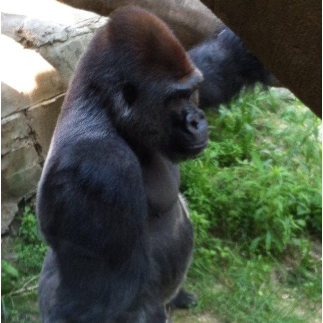 25 best omaha zoo images on pinterest omaha zoo the zoo and zoos henry doorly zoo in omaha publicscrutiny Image collections