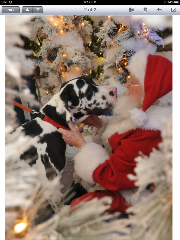 10 Best Truman The Great Dane Images On Pinterest Great
