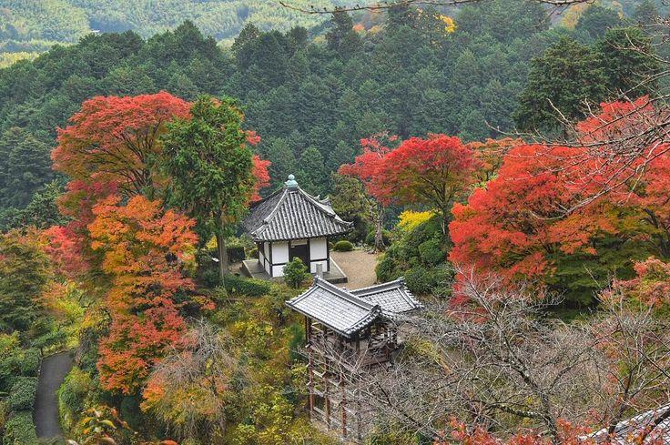 ' ' 【京都の紅葉】善峯寺の紅葉🍁 ' 2016.11.17撮影 ' #kyoto #京都 #善峯寺 #紅葉 #秋 #autumn #fall #team_jp_ #gf_japan #igersjp #ig_japan #ig_nippon #wu_japan #loves_nippon #lovers_nippon #japanfocus #icu_japan #wonderful_places #ptk_japan #japan_daytime_view ' #team京都 #team_jp_西 京都 #team_jp_秋色2016 #はなまっぷ紅葉2016 #lovers_nippon_2016秋 #ぶらり京都撮影部 ' #k_紅葉2016