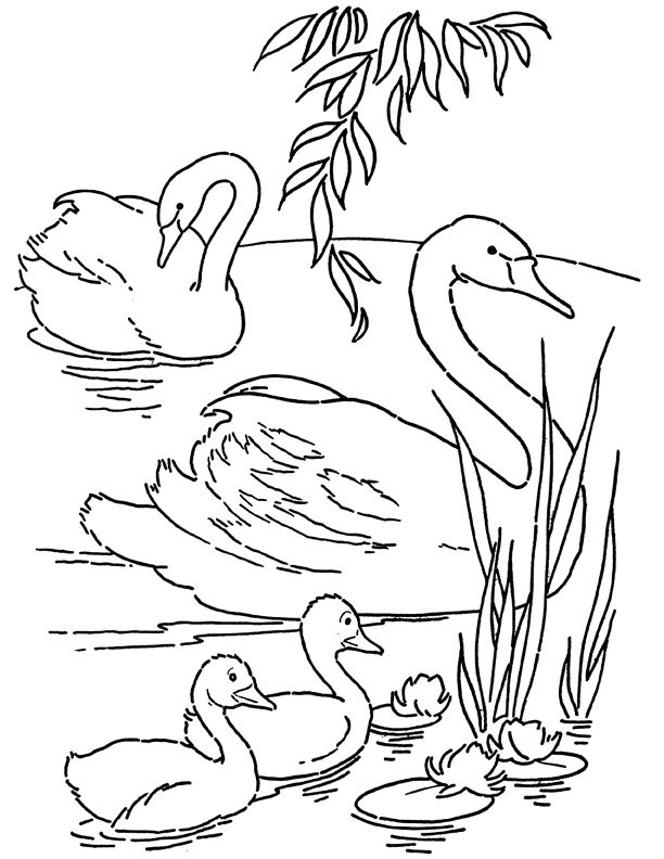 Free Printable Swans Coloring Page Free Online Coloring