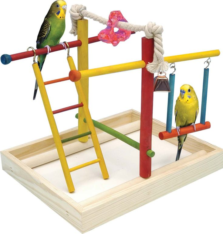 Try using parakeet toys to keep your baby chicks busy!