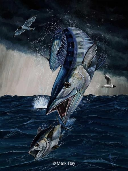 Prints - Saltwater Game Fish by Mark Ray 4