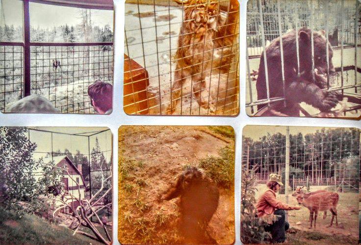 Ancien Enclos des animaux au Zoo de St-Félicien en Août 1975