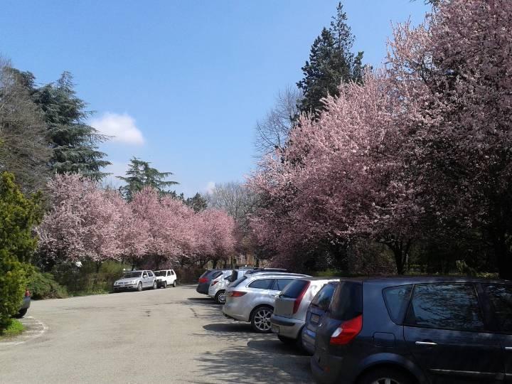 Primavera in Ifoa