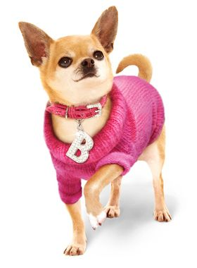 Bruiser's Outfit - Pink Sweater / Diamante Collar and Lead Set | Dog OMIGOD! Bruiser's Wardrobe at UrbanPup.com