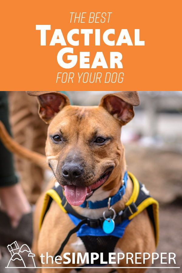 6b4aa77f2f14b Find the BEST TACTICAL GEAR for your dog! Collars, Leashes, Harnesses, Vests  and more! #Prepper #Tactical #Dog #Gear #Camping #Hiking #Survival
