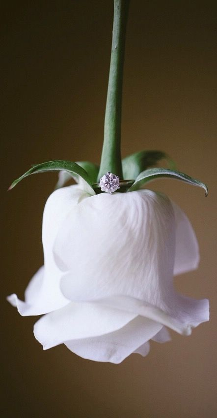 Simple, beautiful setup for a close-up engagement ring photo.