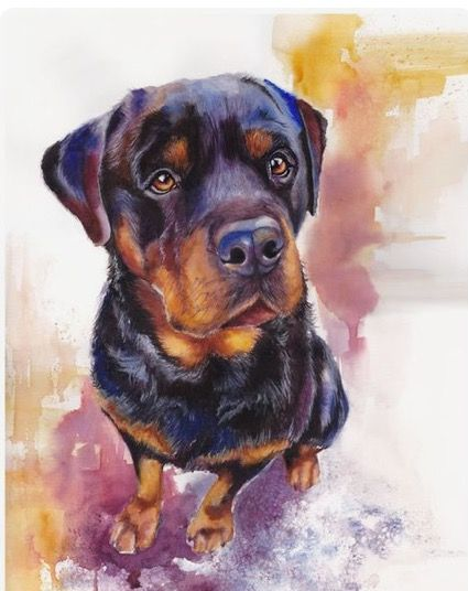 Jessica Lindell | WATERCOLOR | Rottweiler