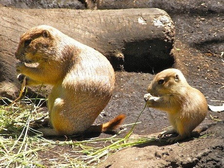 ParentGround Squirrels, Children Pick
