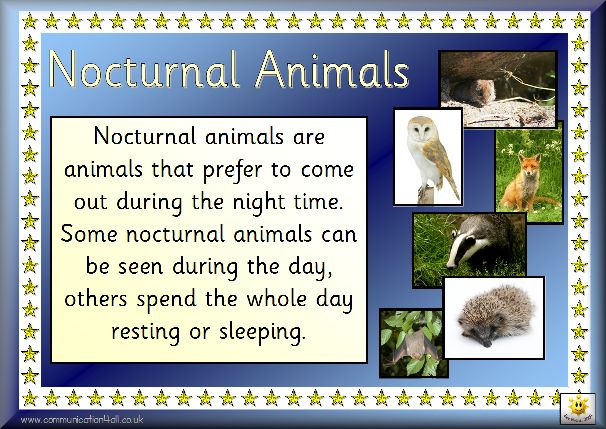 Here's a set of posters on nocturnal animals.