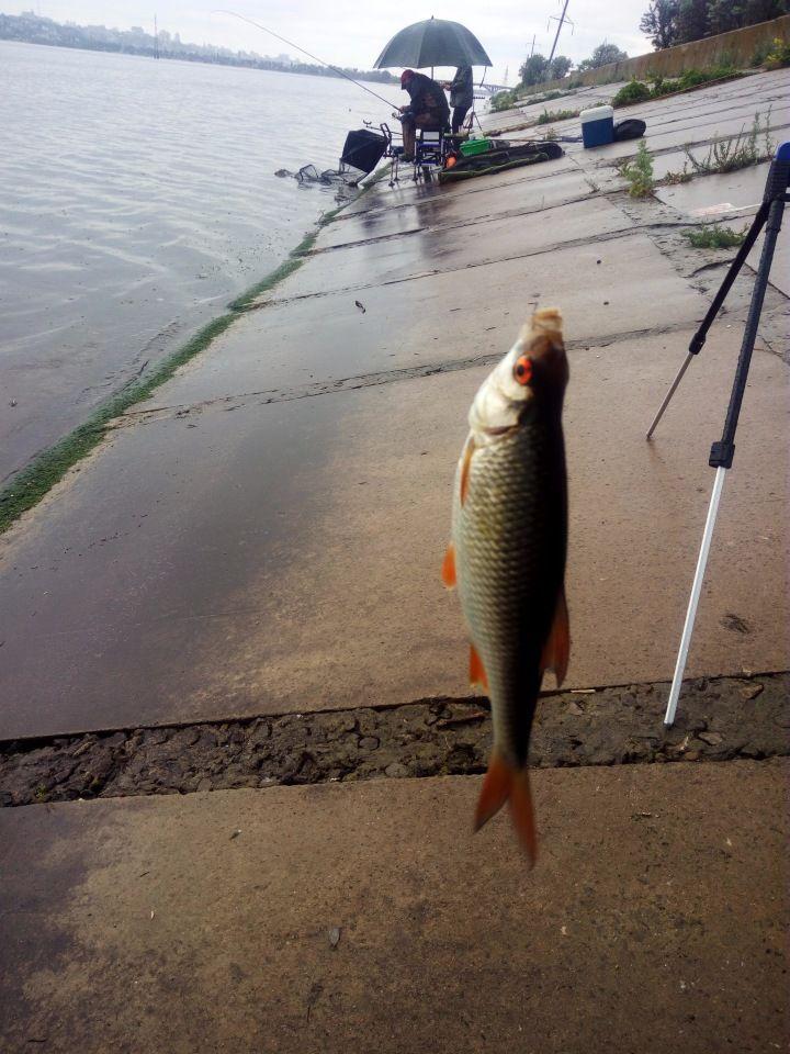 Рыбалка на Воронежском водохранилище