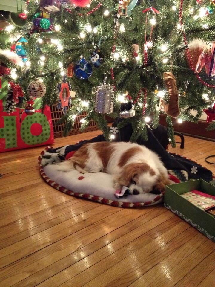 Sweet Dude at Christmas