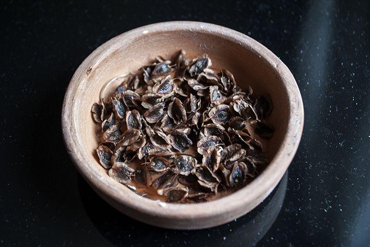Preincoltirea semintelor este o tehnica ce ne ajuta la eliminarea situatiilor in care, semanam un strat cu morcovi, si asteptam si asteptam, pana cand ne plictisim fara a vedea ca rasare ceva, apoi mai cumparam