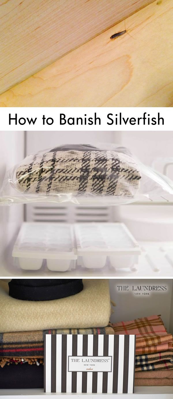 25 best ideas about silverfish on spider