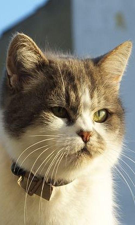 sooooo Pretty kitty cat    by Moldovia - Flickr