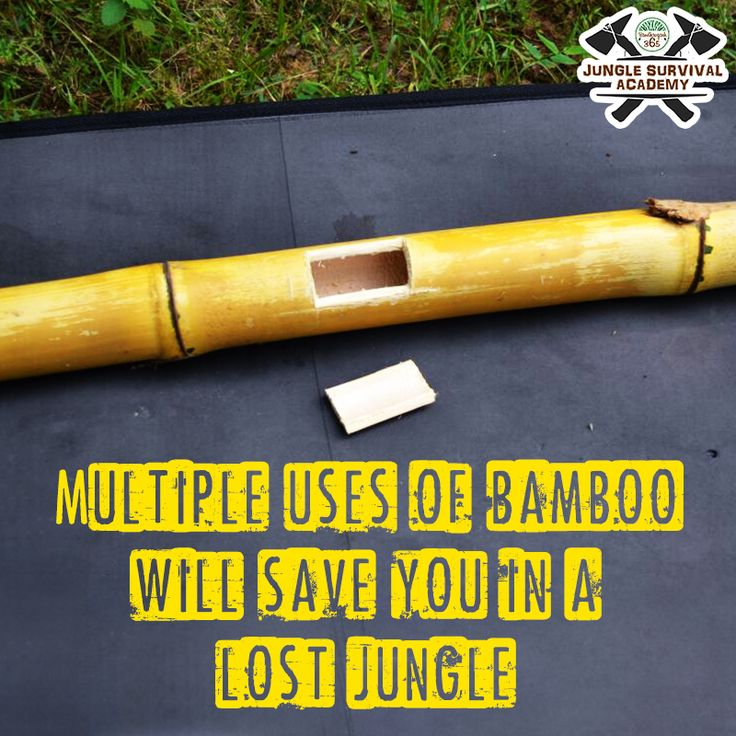 If you can find bamboo in a jungle, your chances of surviving increase automatically. Join #JungleSurvivalAcademy!  Book: http://www.bandhavgarh365.com/jungle-survival-activity/ #wildernesssurvival #JungleSurvival #Jungle