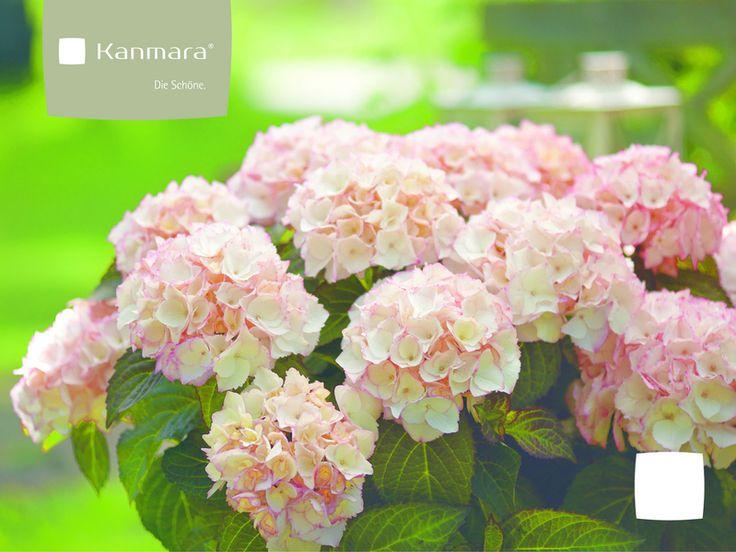 Kanmara