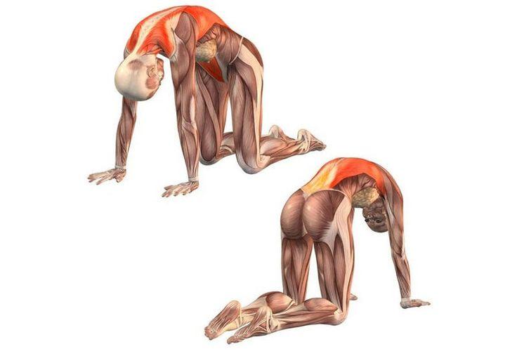 Фасциальная гимнастика: 2 упражнения, активизирующие процесс саморегуляции организма