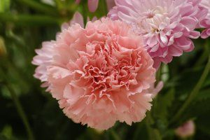 As flores e seus significados no Casamento: Cravo. Geralmente nos casamentos o cravo habita a lapela do noivo, e o seu significado até que tem um quê masculino: Significam dinheiro, sucesso e afrodisíaco.
