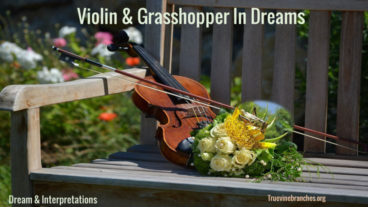 """My Dream I was in my bedroom playing my violin. As I was playing my violin, I practiced the song """"gavotte."""" While I was playing the song I saw a big grasshopper …"""