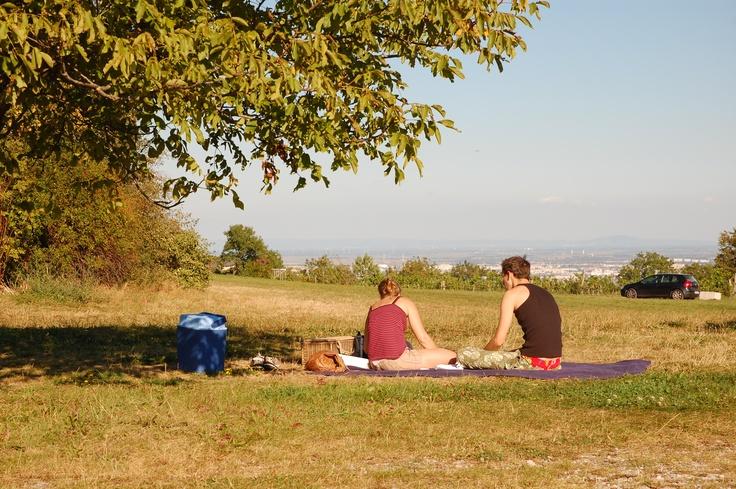 Cobenzl Picknicken in wien