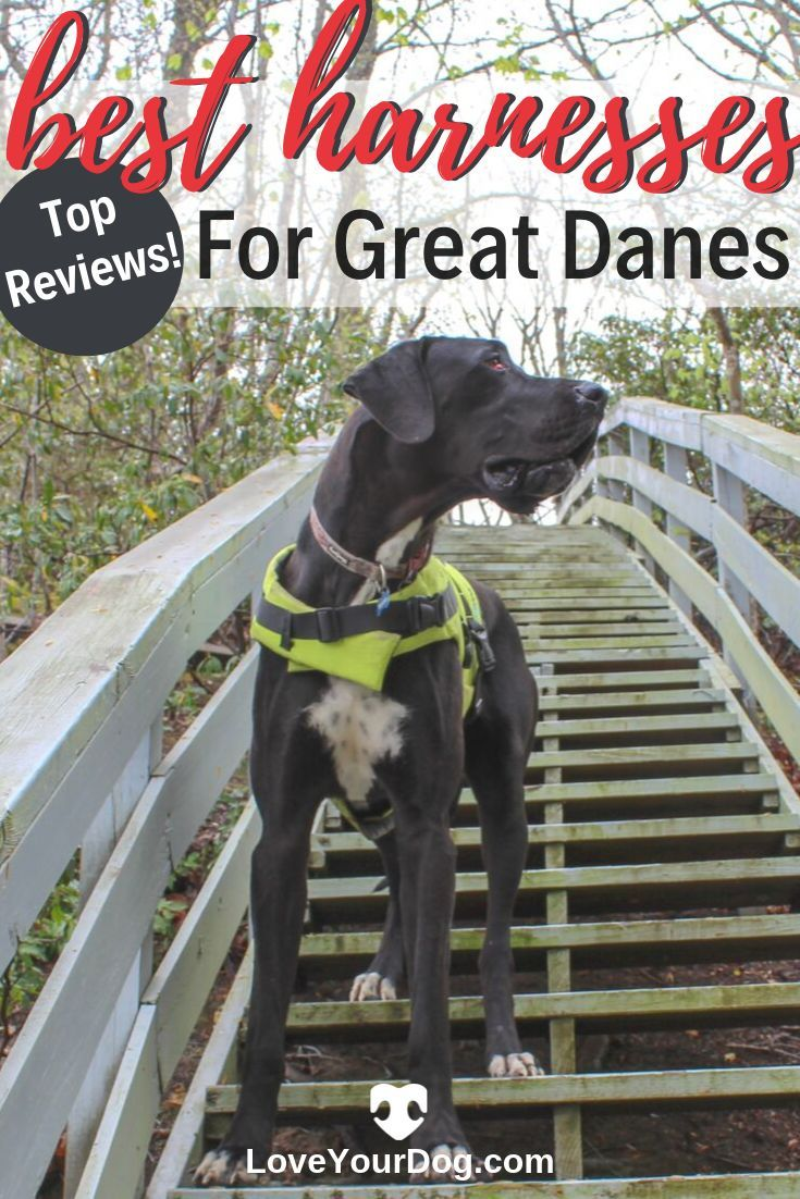 Best Xxl Harnesses For Great Danes Ratings Reviews Great Dane
