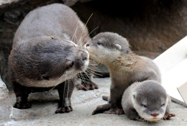 The baby otters were too cute to be able to pick just one picture from.. ;)
