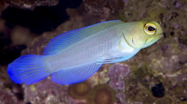 60 best saltwater fish images on pinterest fish for Marine fish store