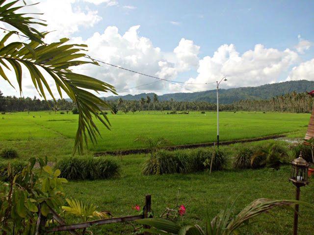Viaggi in Indonesia: Amurang il parco e le risaie