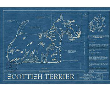 Scottish Terrier Blueprint $185