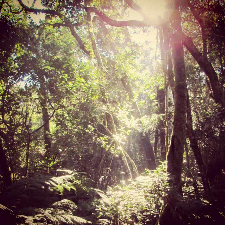 Garden of Edan.   Knysna, South Africa