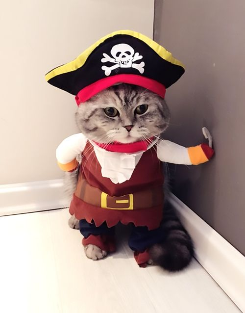 Arrrrhhh matie hand me all yer tuna! Pirate CAT Costume https://suddenlycat.com/shop/hats/pirate-cat-costume/