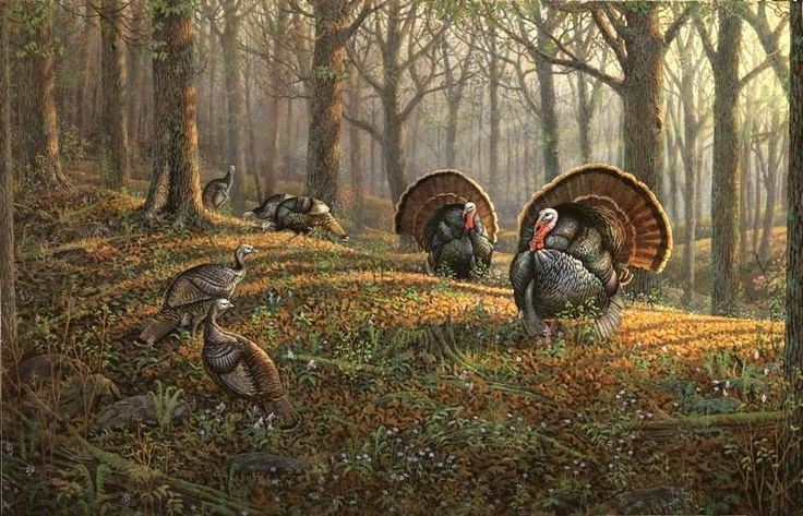 Sam Timm Wild Turkeys In Forest Art Of Sam Timm In