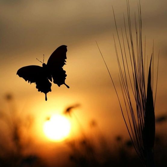 a butterfly at sunset