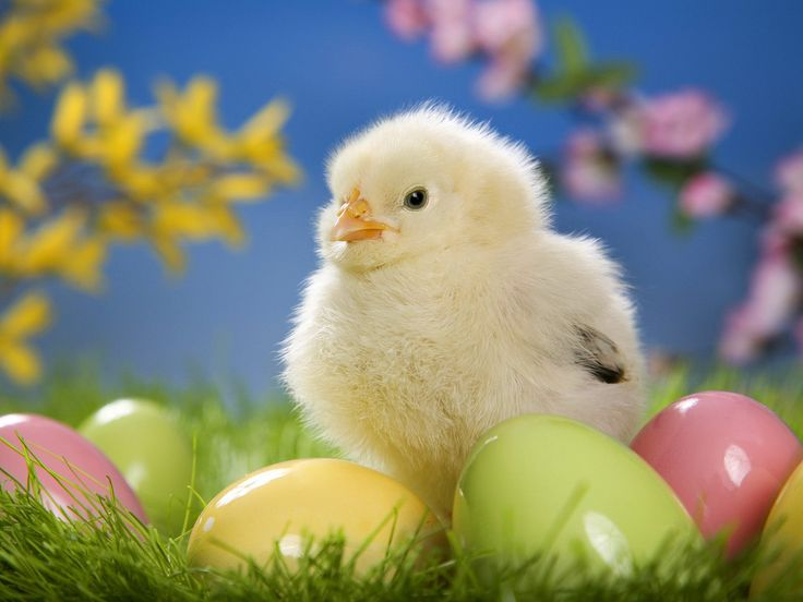 Easter Pictures Ideas Best Quotes | Easter 2016