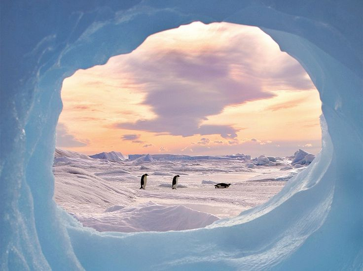 Three emperor penguins shuffle across Antarctic ice in this National Geographic Photo of the Day from our Your Shot community.