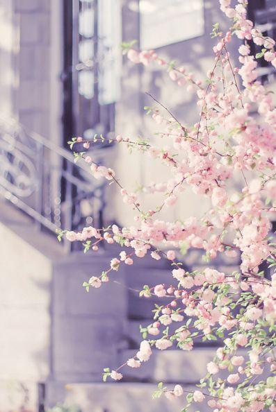 Spring blossom #magicalmarch