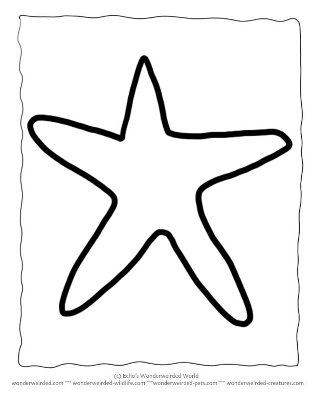 Printable Starfish Template, Echo's Free Starfish Outline Patterns at www.wonderweirded-wildlife.com, For Ocean Crafts Activities for Kids